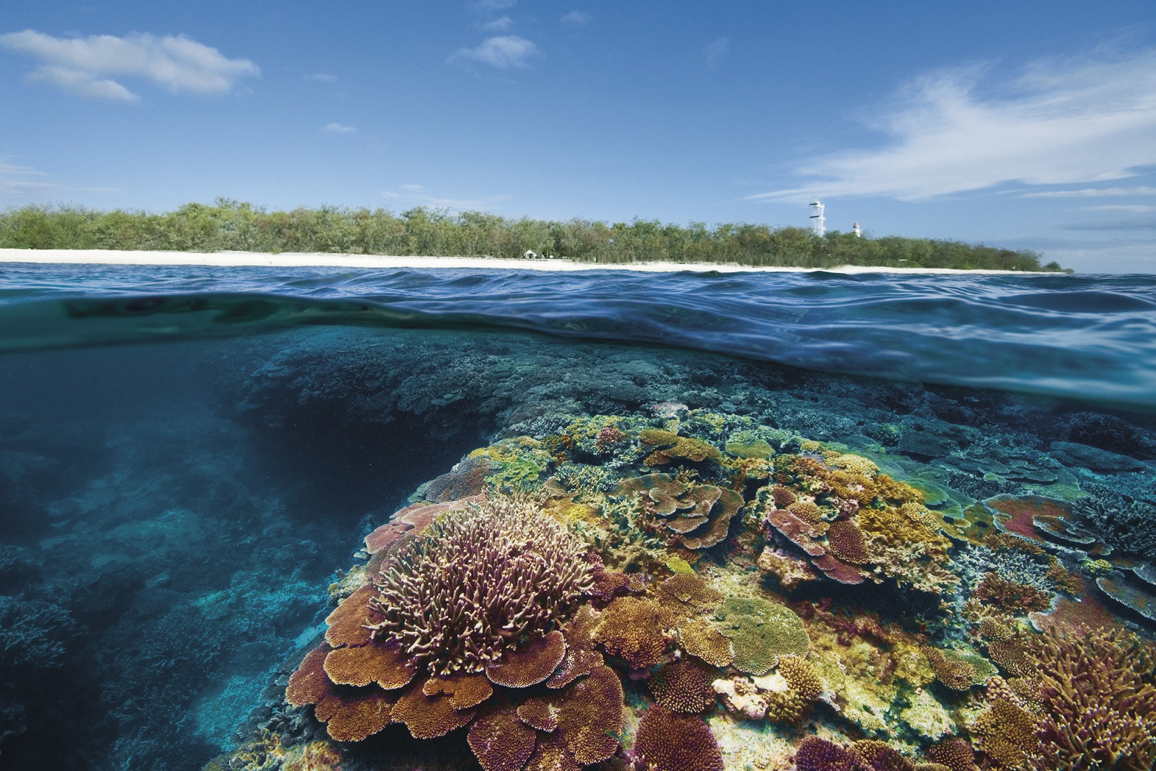 2017澳洲最佳島嶼體驗由伊利特女士島獲得冠軍