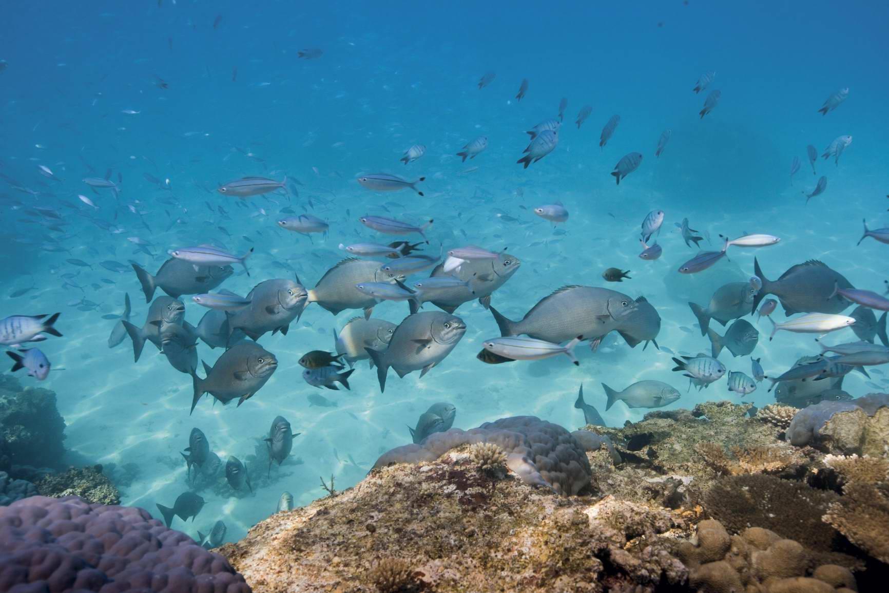 你絕對沒體驗過的澳洲黃金海岸釣漁樂趣