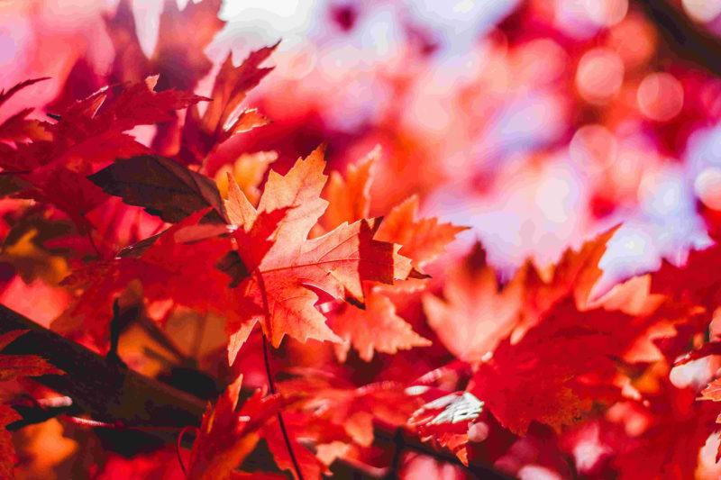 今年秋天日本賞楓價格最優惠的超值飯店