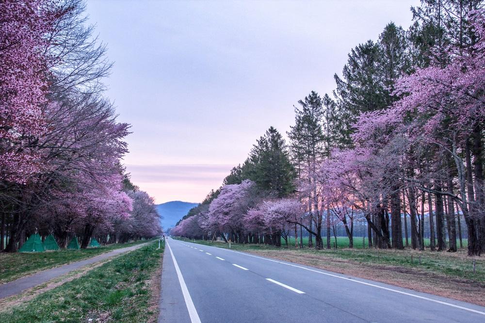 今年春天快去這幾個日韓最美的賞櫻地點