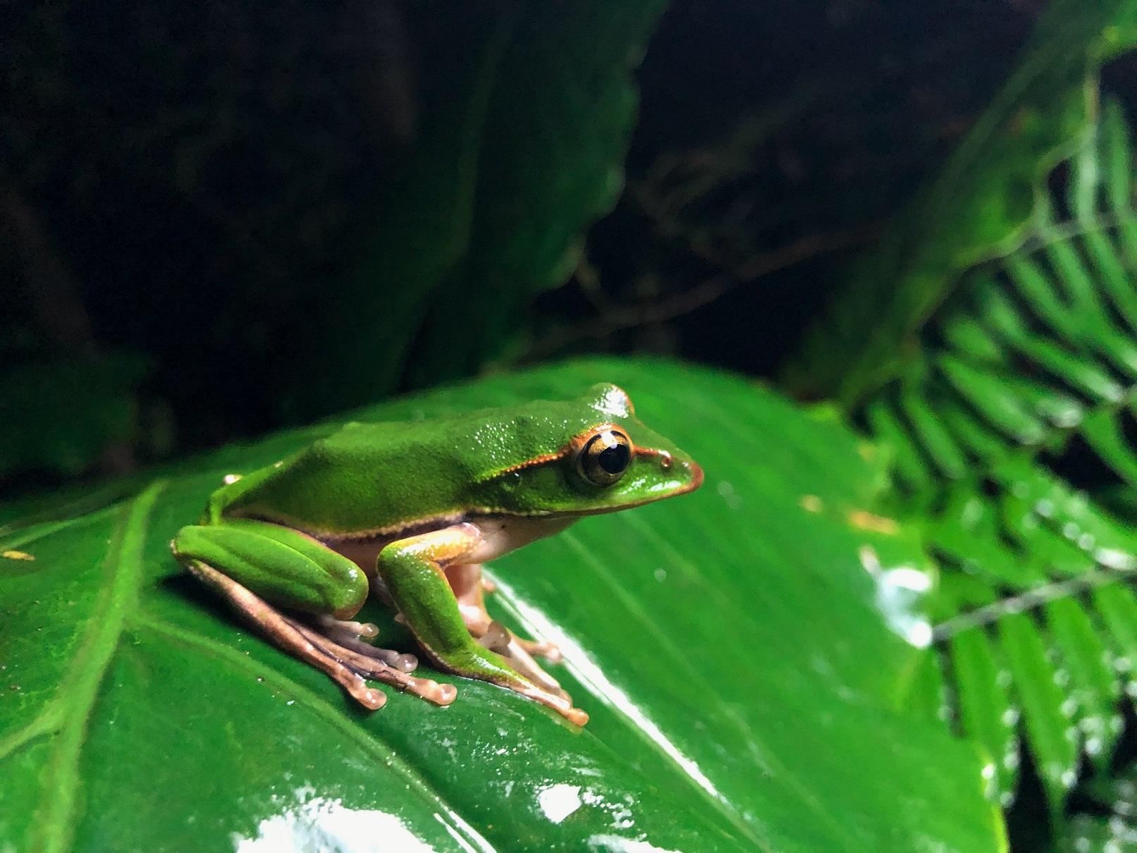 生態攝影師施信鋒教你用iPhone X拍出台灣動植物的感動