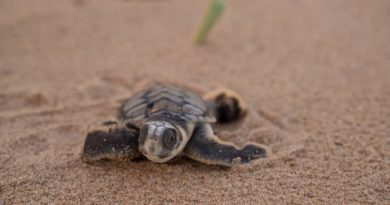 海龜近距離觀察之旅 在澳洲等你