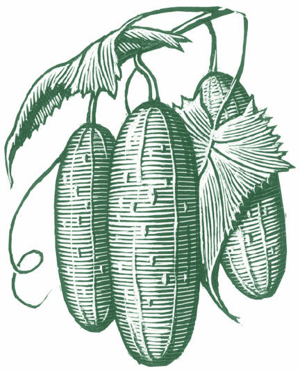 Hendrick's Large Cucumber Etching