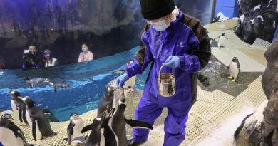 「我與企鵝的0.1毫米」企鵝飼育照護體驗 1月28日中午12點開放3月場次預訂