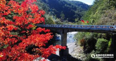 來場美「楓」之旅吧!KLOOK推薦全台6大人氣賞楓、落羽松好去處